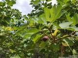 216 Live Oak Pl - Photo 36