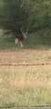357 Cowboy Spur - Photo 2