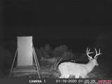 950 Buck Trl - Photo 1