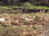 LOT 645 Martingale Trail - Photo 1