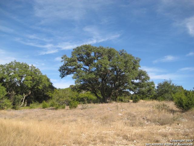 2539 Black Bear Dr, New Braunfels, TX 78132 (MLS #1282975) :: Magnolia Realty