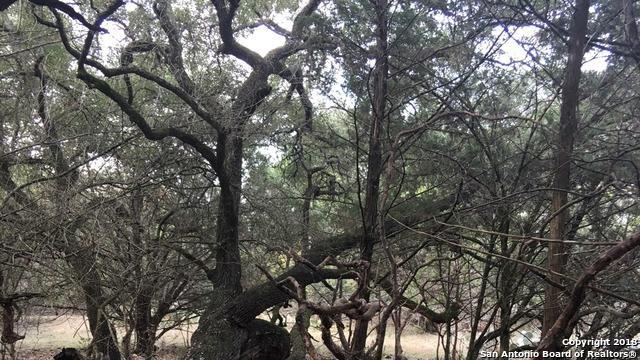 286 Primrose Path, Canyon Lake, TX 78133 (MLS #1291169) :: Magnolia Realty
