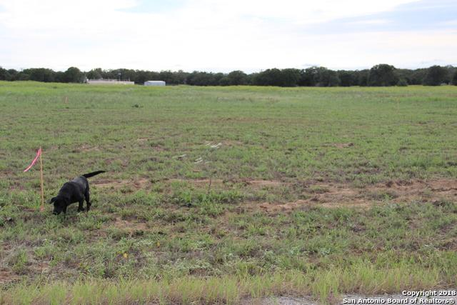221 Colonial Ln, La Vernia, TX 78121 (MLS #1347694) :: Alexis Weigand Real Estate Group