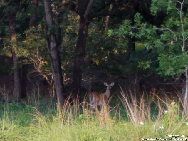 129 Misty Oaks Ln, Floresville, TX 78114 (MLS #1385858) :: River City Group