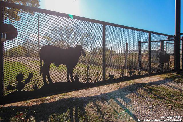 11794 New Sulphur Springs Rd, Adkins, TX 78101 (MLS #1428043) :: Warren Williams Realty & Ranches, LLC