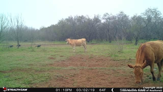 1300 County Road 2537, Moore, TX 78057 (MLS #1446040) :: Warren Williams Realty & Ranches, LLC