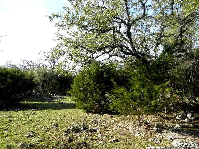 615 Rittimann Rd, Spring Branch, TX 78070 (MLS #1458080) :: Tom White Group