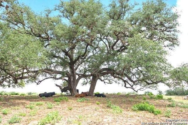 1011 County Road 332, Sutherland Springs, TX 78161 (MLS #1472041) :: The Gradiz Group