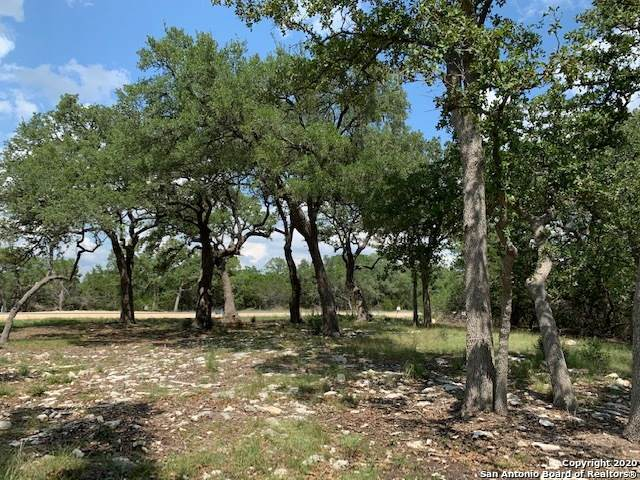 859 Maximino Ridge, Bulverde, TX 78163 (MLS #1483529) :: The Gradiz Group