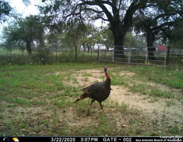 218 Pratt Road, Poteet, TX 78065 (MLS #1495265) :: The Glover Homes & Land Group