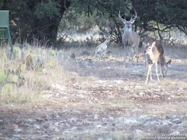 TRACT 13 Antelope Draw Ranch, Menard, TX 76859 (MLS #1503120) :: JP & Associates Realtors