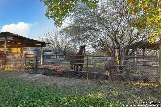 155 County Road 6712, Natalia, TX 78059 (MLS #1504428) :: BHGRE HomeCity San Antonio