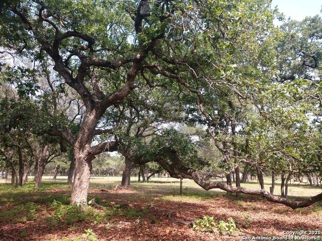 230 S Palo Alto Dr, Floresville, TX 78114 (MLS #1562333) :: The Rise Property Group
