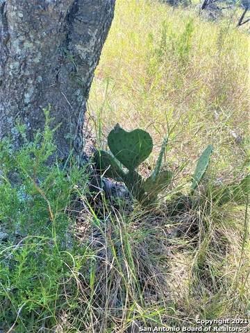 00 Palomino Spgs, Bandera, TX 78003 (MLS #1565353) :: Beth Ann Falcon Real Estate