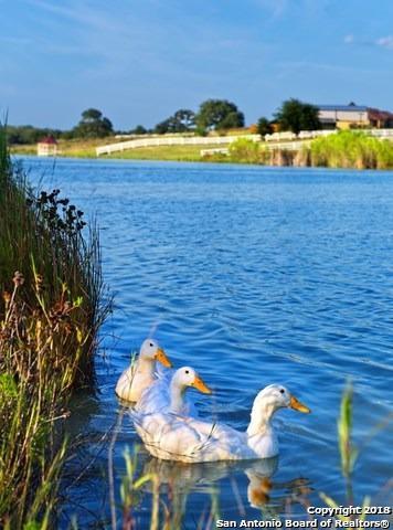 105 Medora Br Dr, Floresville, TX 78114 (MLS #1294836) :: BHGRE HomeCity