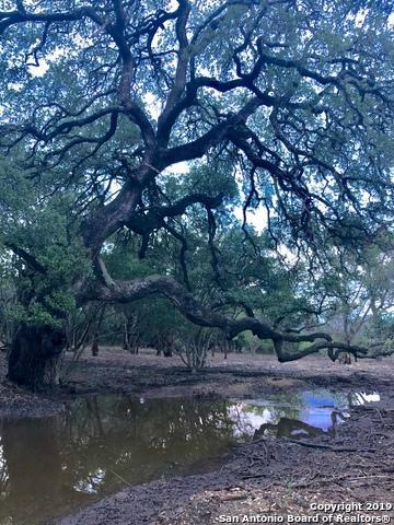 134 Stallion Estates Dr, Spring Branch, TX 78070 (MLS #1366010) :: Magnolia Realty