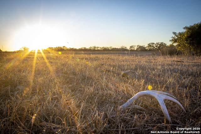 925 Branch Road, Geronimo, TX 78155 (MLS #1460158) :: The Rise Property Group