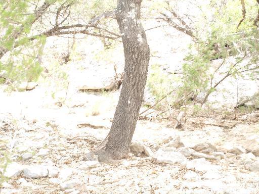 100 Deer Run Dr, Bandera, TX 78003 (MLS #845063) :: Magnolia Realty