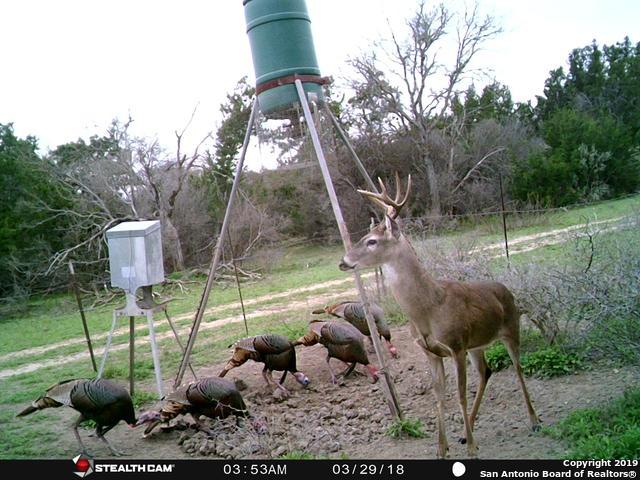 794 County Road 2615, Rio Medina, TX 78066 (MLS #1332778) :: Vivid Realty