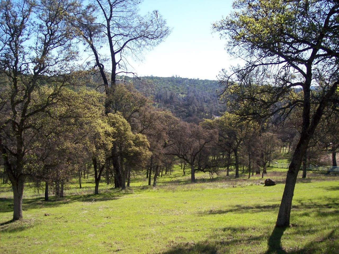 3 Deer Hollow Trail - Photo 1