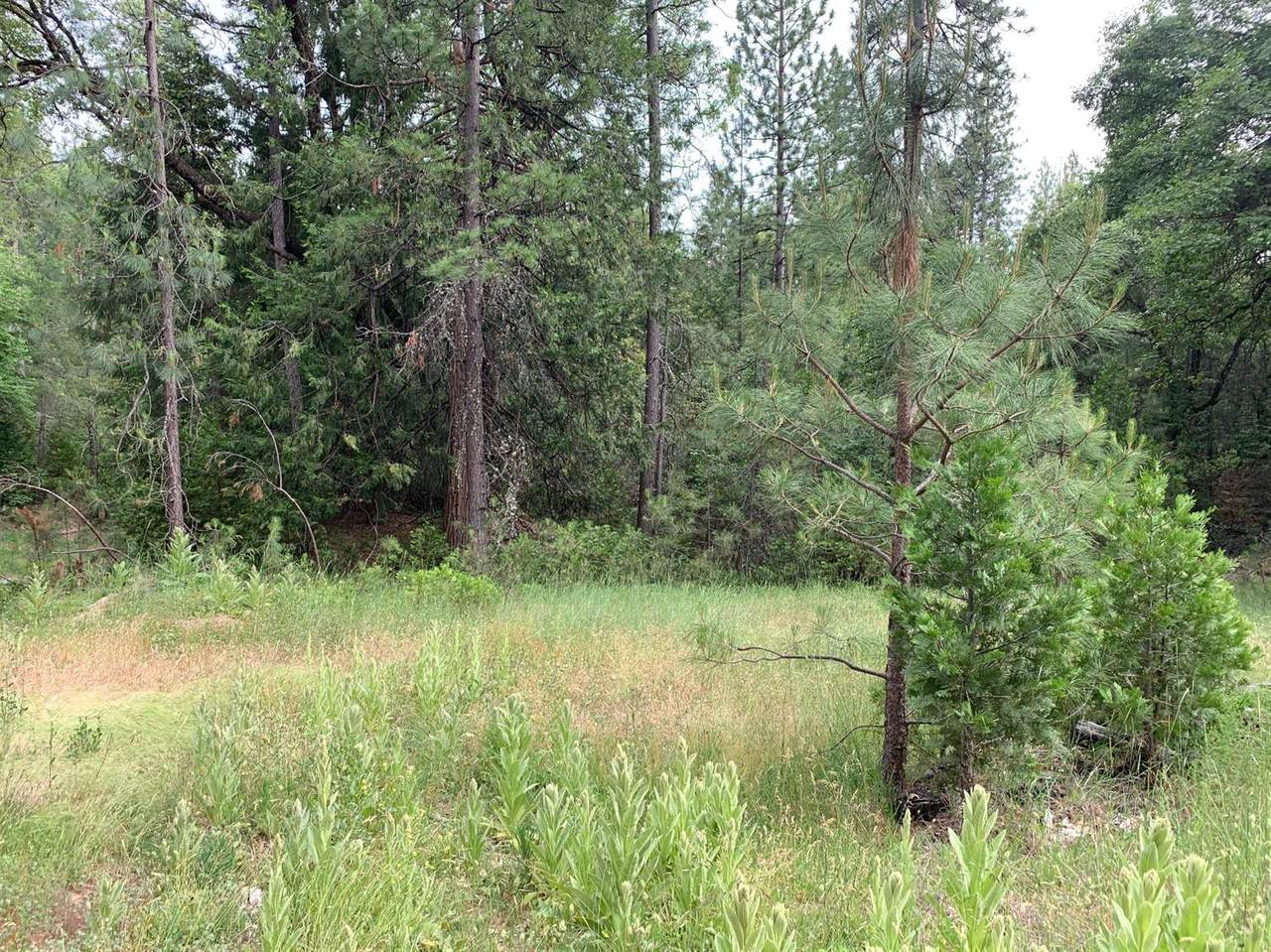 9432 Grizzly Flat Road - Photo 1