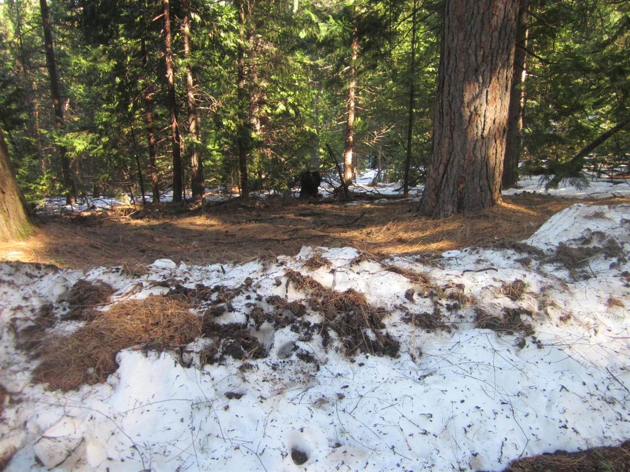 0 Grizzly Flat Road - Photo 1