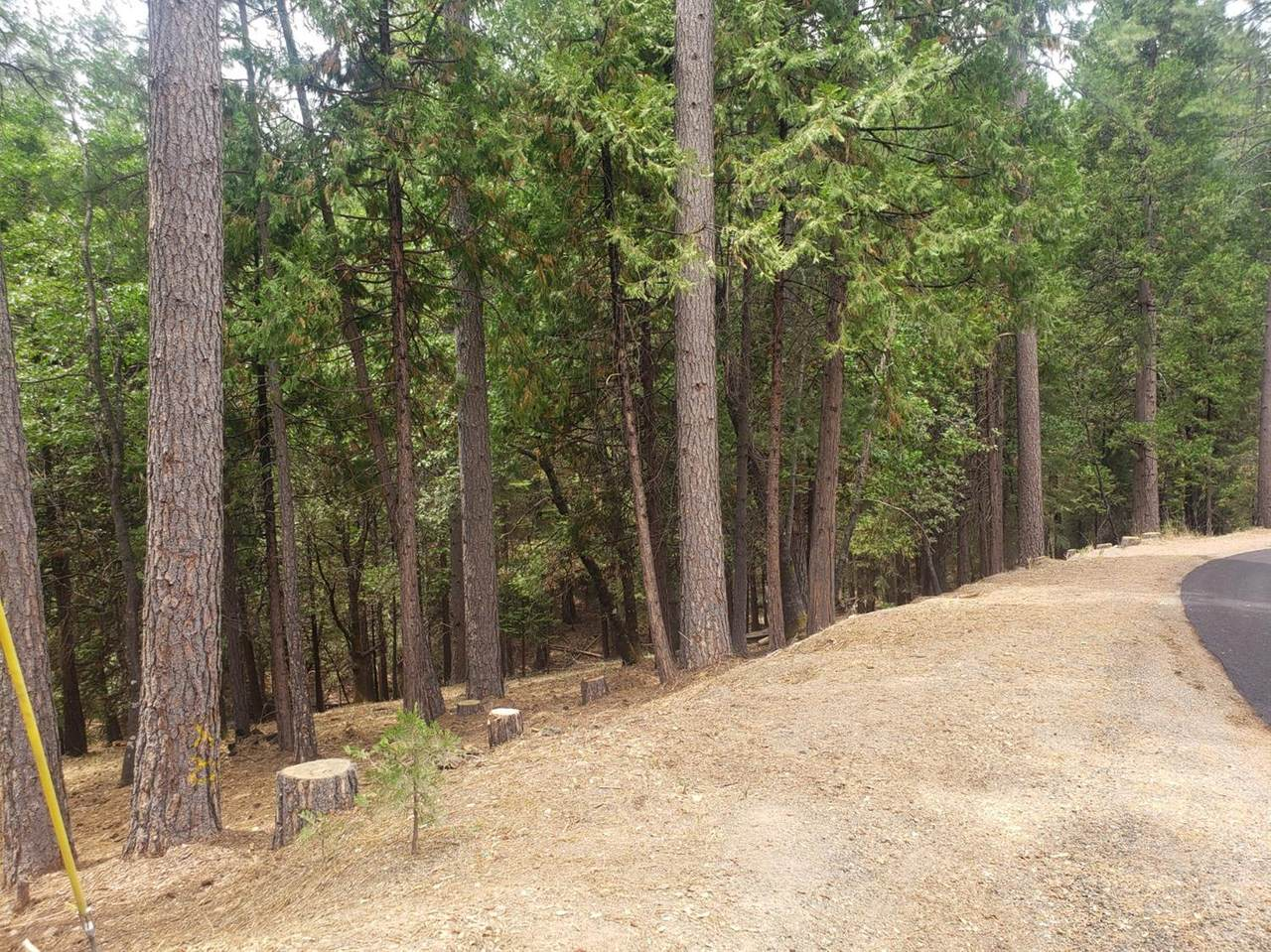 4760 Sierra Springs Drive - Photo 1