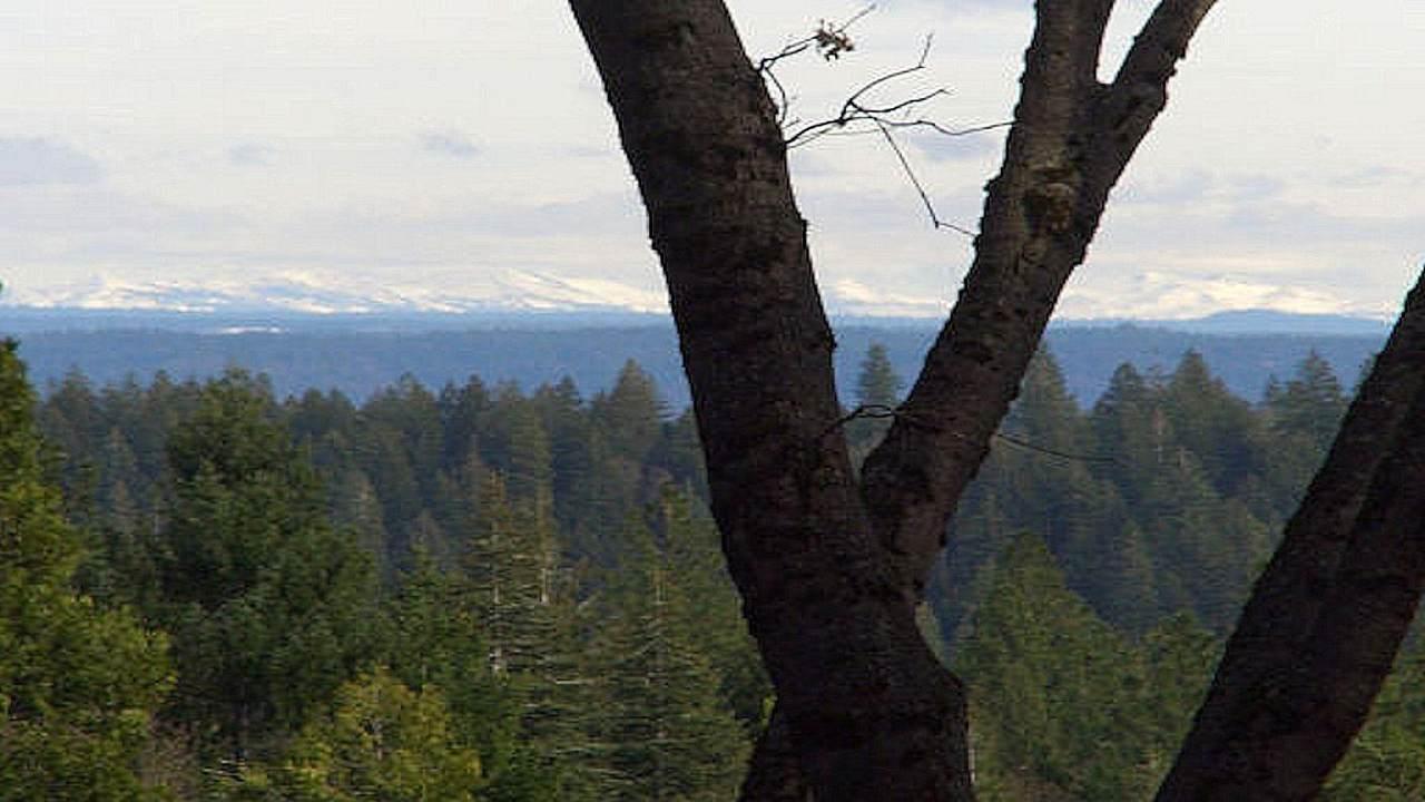 14743 Banner Lava Cap Road - Photo 1