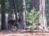 5476 Pine Ridge Drive - Photo 3