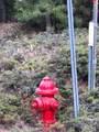 2157 Backwoods Trail - Photo 4