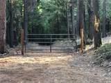 2157 Backwoods Trail - Photo 6