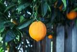 3350 Pepper Tree Lane - Photo 49