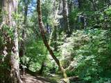 0 Clear Creek Road - Photo 15