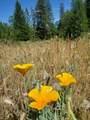 0 3820 Bear Ridge Rd - Photo 6
