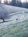 4026 Winterhill Drive - Photo 47