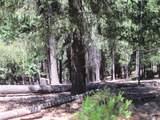 5407 Pine Ridge Drive - Photo 4