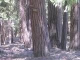 5407 Pine Ridge Drive - Photo 5