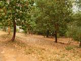 17686 S. Mace Drive - Photo 5