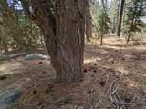 51082 Jeffery Pine Drive - Photo 4