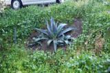 529 Landis Circle - Photo 52