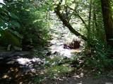 0 Clear Creek Road - Photo 2