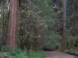 0 Clear Creek Road - Photo 6