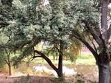 2301 Live Oak Court - Photo 17