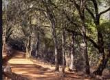 17470 Winding Oaks - Photo 6