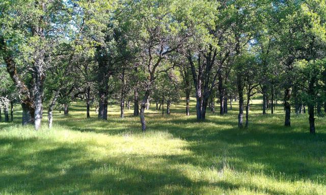 11133 Oak Mesa Drive, Auburn, CA 95602 (MLS #17053899) :: Keller Williams - Rachel Adams Group
