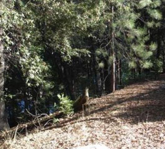 27709 Evelyn Court, Pioneer, CA 95666 (MLS #17077112) :: Keller Williams - Rachel Adams Group