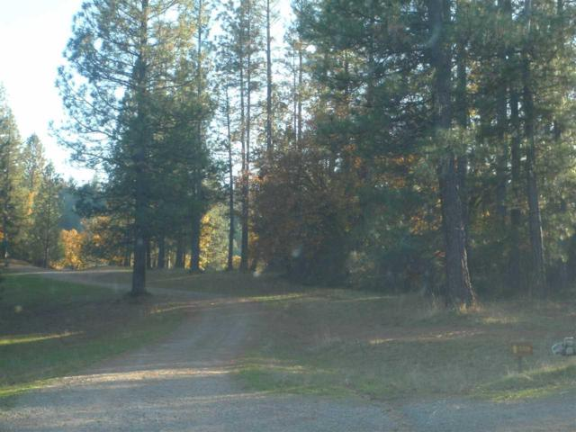 0-0 Blue Mountain Road, Wilseyville, CA 95257 (MLS #17601570) :: NewVision Realty Group