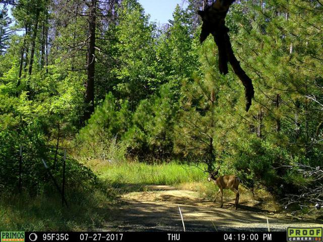 20801 Incense Cedar Trail, Groveland, CA 95321 (MLS #18023417) :: Heidi Phong Real Estate Team