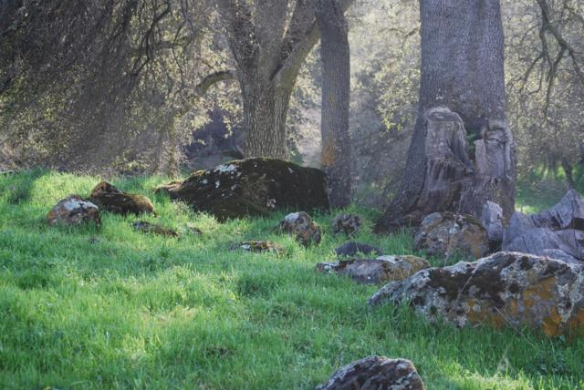 0-5 ACRES Greenstone Road, Placerville, CA 95667 (MLS #18040101) :: NewVision Realty Group