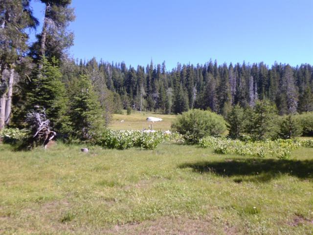 0 Forest Service Road 8N15 Road, Kirkwood, CA 95646 (MLS #18054773) :: Heidi Phong Real Estate Team